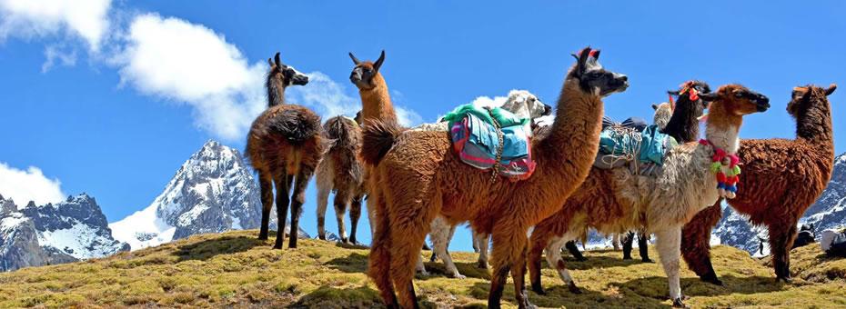Lares a Machu Picchu 4 dias